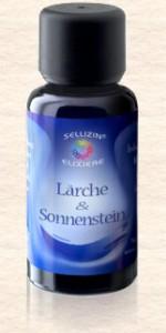 31 Larch & Zonnesteen